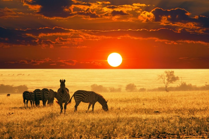 L'Afrique peut-elle s'en sortir ?